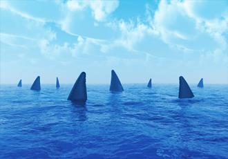 Sharks blog image