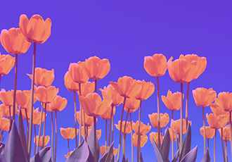 FlowForma Spring Wrap Up: Complimentary Resources To Empower Your Business